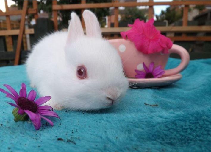 迷你兔有什么样的特点?多少钱一只